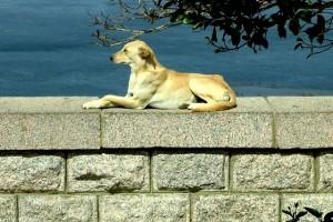 sunbathing dog on the high dam Aswan, Egypt