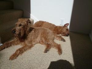 Feenix and wonder sunbathing