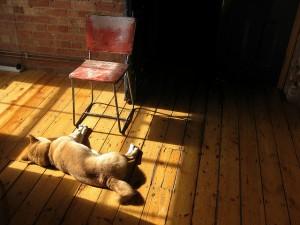 Alfie enjoys the sun by the chair