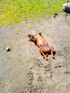 This dog was truly sunbathing lol!