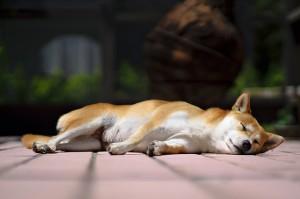 Patio Sunbathing