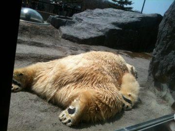 クマもダウン