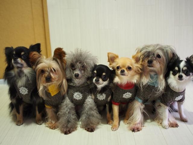 色んな犬たち